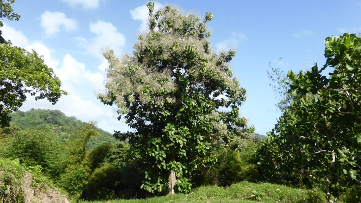 Teakbaum im tropischen regenwald  Teakbaum Im Tropischen Regenwald | ambiznes.com